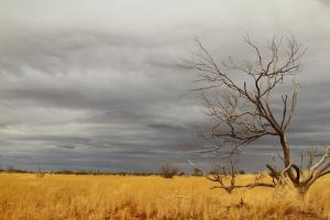 desert-rain-2am-111744_7d_blog