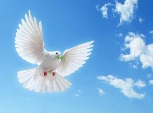 dreamstime_dove